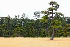 Japanease-Garten Lizenzfreies Stockbild