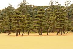 Japanease trädgård Royaltyfri Fotografi