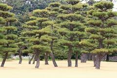 Japanease trädgård Arkivbilder