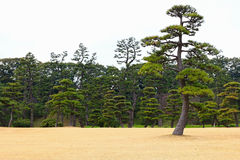 Japanease trädgård Royaltyfri Bild