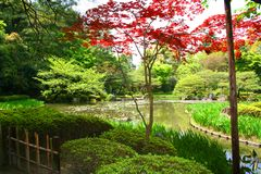 Japanes Garden Royalty Free Stock Images