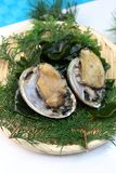 The fresh abalone which I served to a colander. The Japanese abalone is an expensive ingredient characterized by a firm, almost crunchy texture Royalty Free Stock Photography