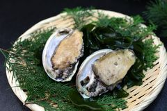 The fresh abalone which I served to a colander. The Japanese abalone is an expensive ingredient characterized by a firm, almost crunchy texture Royalty Free Stock Photo