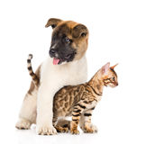 Japanese Akita inu puppy dog hugs little bengal cat. isolated on white.  Royalty Free Stock Image