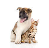 Japanese Akita inu puppy dog sitting with little bengal cat. isolsted. Japanese Akita inu puppy dog sitting with little bengal cat. isolated on white Stock Photo