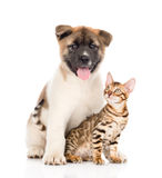 Japanese Akita inu puppy dog sitting with little bengal cat.. Isoted on white Royalty Free Stock Photography