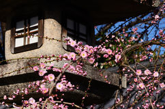 Japanese apricot flowers and lantern, Kyoto Japan Royalty Free Stock Photo