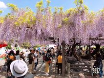 Japanese atmosphere stock image