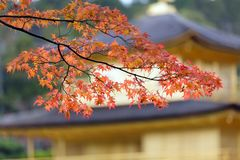 Japanese autumn Stock Photography