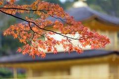 Japanese autumn Stock Photography
