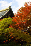 Japanese autumn. Autumn momidzi (red leaves of japanese maple) in Japan Stock Photos