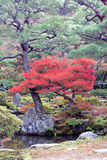 Japanese autumn garden Royalty Free Stock Photography