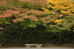 Japanese autumn scenery Royalty Free Stock Image