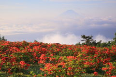 Japanese azalea with Mt. Fuji Royalty Free Stock Photos