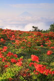 Japanese azalea with Mt. Fuji Stock Photography