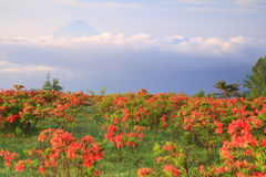 Japanese azalea with Mt. Fuji Stock Photos