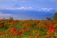 Japanese azalea with Mt. Fuji Stock Image