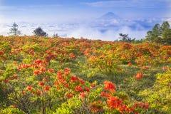 Japanese azalea with Mt. Fuji Royalty Free Stock Photography