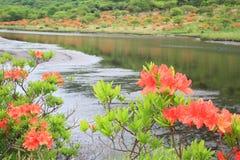 Japanese azalea whith marshland. Mt. Akagi Kakumanbuchi, Gunma, Japan stock image