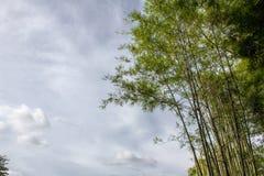 Japanese Bamboo and Blue Sky in Nekoemon cafe chiang mai thailand stock photos