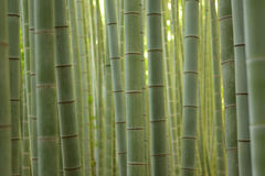 Japanese Bamboo forests background Royalty Free Stock Image