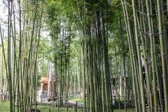 Japanese Bamboo Garden in Nekoemon cafe chiang mai thailand stock image