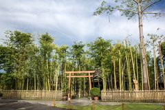 Japanese Bamboo Garden in Nekoemon cafe chiang mai thailand stock images