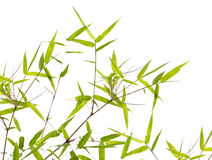 Japanese bamboo leaves Royalty Free Stock Photo