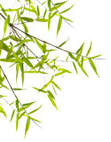 Japanese bamboo leaves stock images
