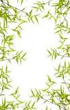 Japanese bamboo leaves Stock Image