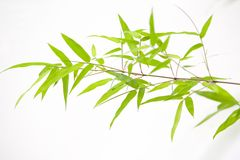 Japanese bamboo leaves Royalty Free Stock Images