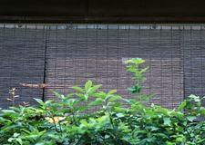 Japanese bamboo wooden curtain for windows background stock photos