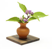 Japanese beautyberry in a vase Stock Photos