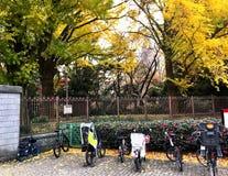 Japanese bicycles at park. Park aun Shinjuku Gyoen bicycles in Japan stock photography