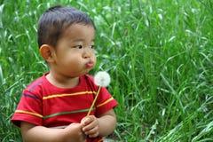 Japanese boy blowing dandelion seeds Stock Photos