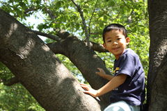 Japanese boy climbing the tree Stock Photo