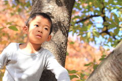Japanese boy climbing the tree Stock Image