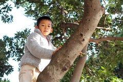 Japanese boy climbing the tree Royalty Free Stock Image
