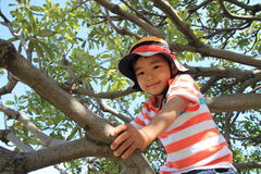 Japanese boy climbing the tree Royalty Free Stock Photo
