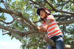 Japanese boy climbing the tree Stock Image