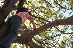 Japanese boy climbing the tree Royalty Free Stock Images