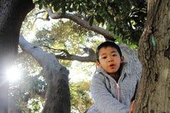 Japanese boy climbing the tree Royalty Free Stock Photos