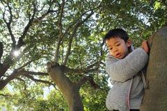 Japanese boy climbing the tree Stock Photos