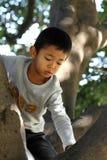 Japanese boy climbing the tree Stock Photography