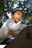 Japanese boy climbing the tree Royalty Free Stock Photography