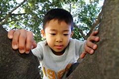 Japanese boy climbing the tree Royalty Free Stock Photo