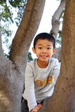 Japanese boy climbing the tree Stock Images