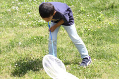 Japanese boy collecting insect. First grade at elementary school royalty free stock images