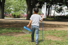 Japanese boy collecting insect. (6 years old royalty free stock images
