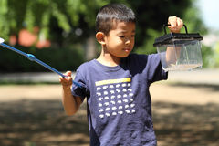 Japanese boy collecting insect royalty free stock images